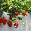 八ヶ岳フルーツ農園 | 山梨県北杜市須玉町小倉にある、八ヶ岳フルーツ農園。一年を通